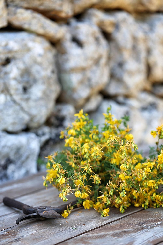 Johanniskraut Johanniskrautöl Depression Nervosität Blüten